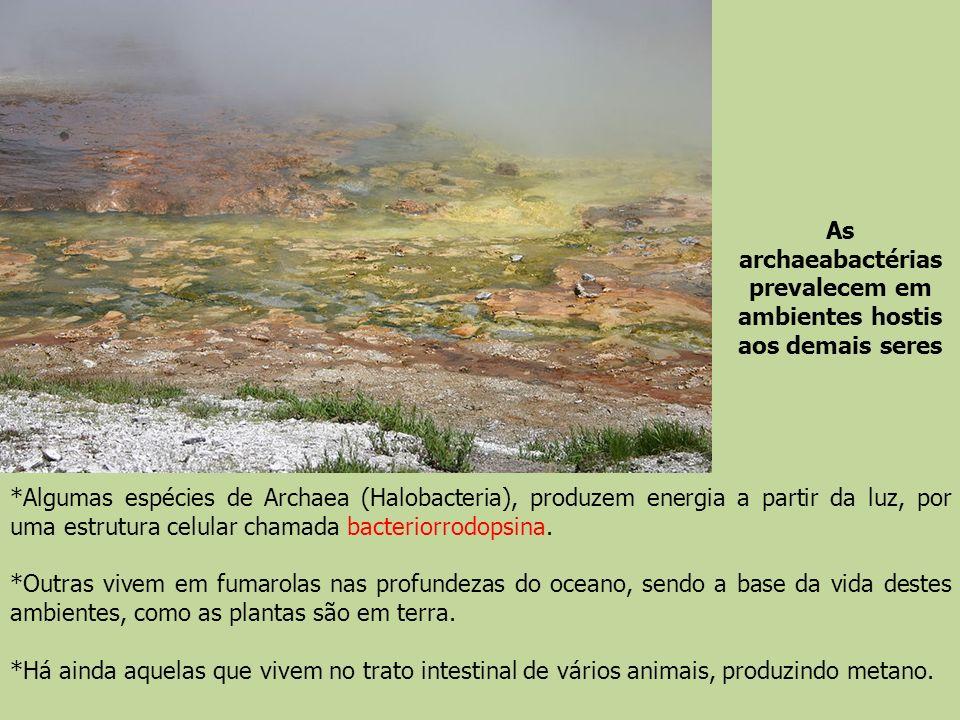 As archaeabactérias prevalecem em ambientes hostis aos demais seres *Algumas espécies de Archaea (Halobacteria), produzem energia a partir da luz, por