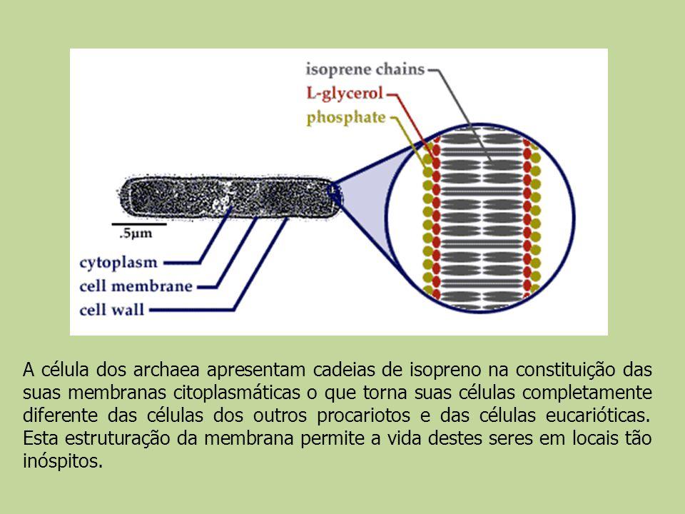 A célula dos archaea apresentam cadeias de isopreno na constituição das suas membranas citoplasmáticas o que torna suas células completamente diferent