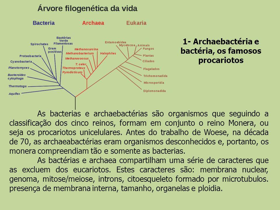 As bacterias e archaebactérias são organismos que seguindo a classificação dos cinco reinos, formam em conjunto o reino Monera, ou seja os procariotos