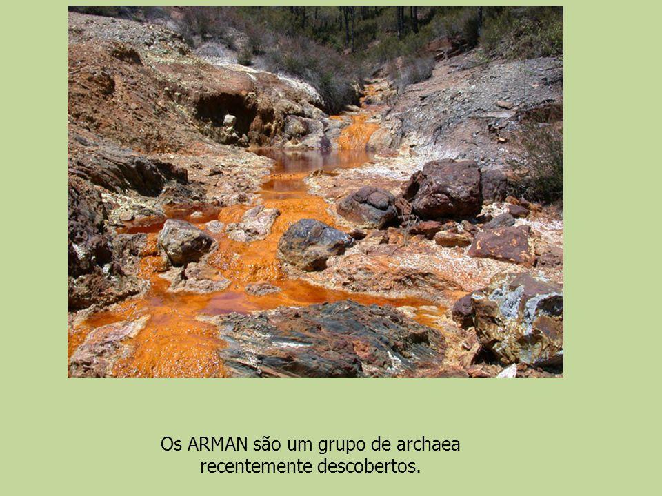 Os ARMAN são um grupo de archaea recentemente descobertos.