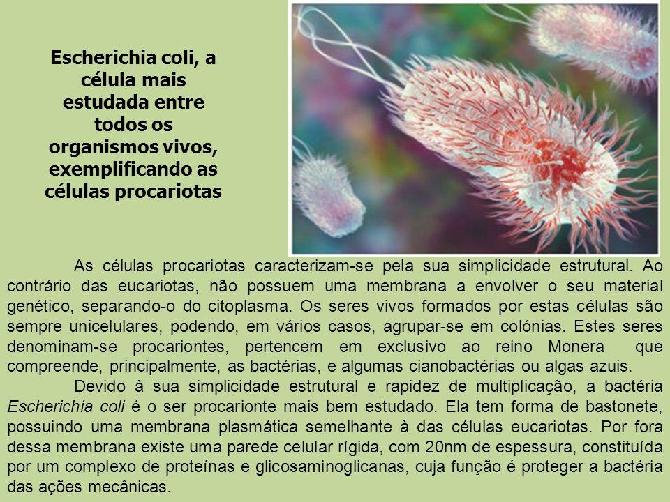 Escherichia coli, a célula mais estudada entre todos os organismos vivos, exemplificando as células procariotas As células procariotas caracterizam-se