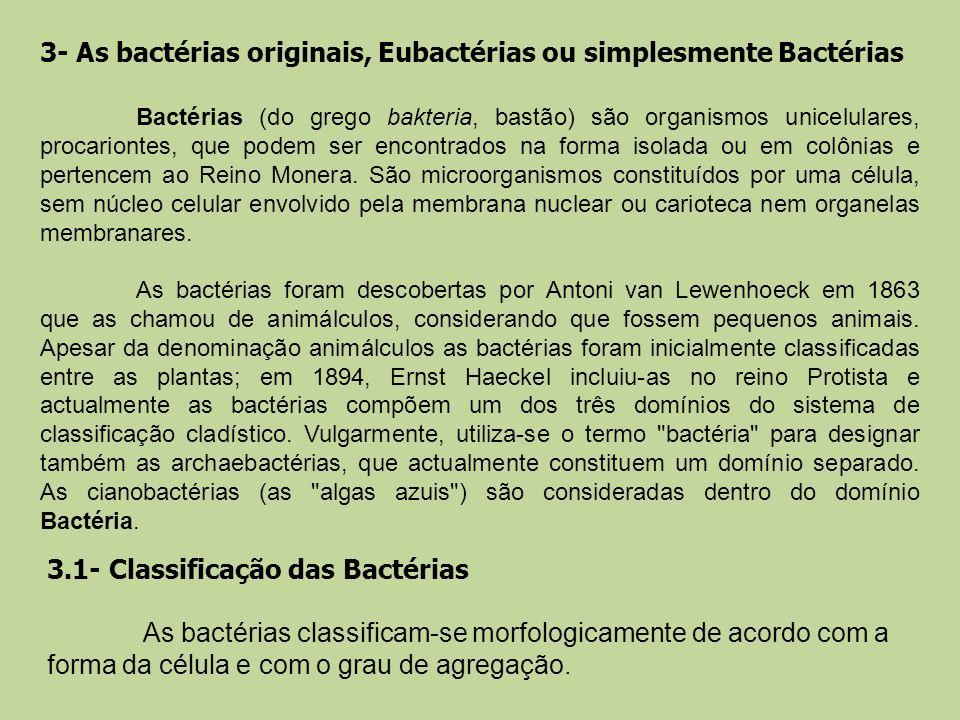 3- As bactérias originais, Eubactérias ou simplesmente Bactérias Bactérias (do grego bakteria, bastão) são organismos unicelulares, procariontes, que