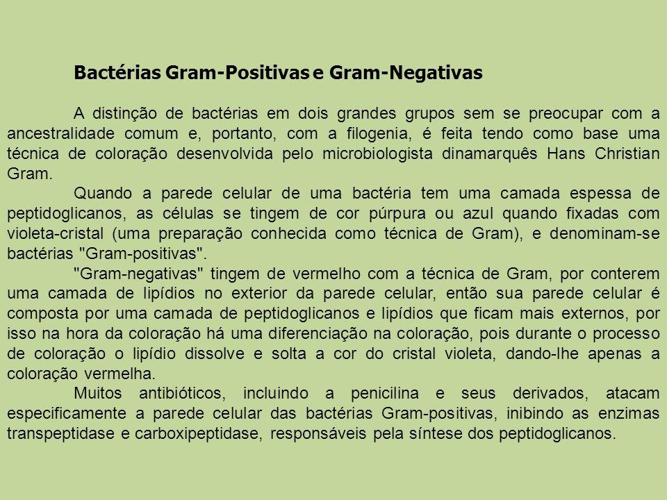 Bactérias Gram-Positivas e Gram-Negativas A distinção de bactérias em dois grandes grupos sem se preocupar com a ancestralidade comum e, portanto, com