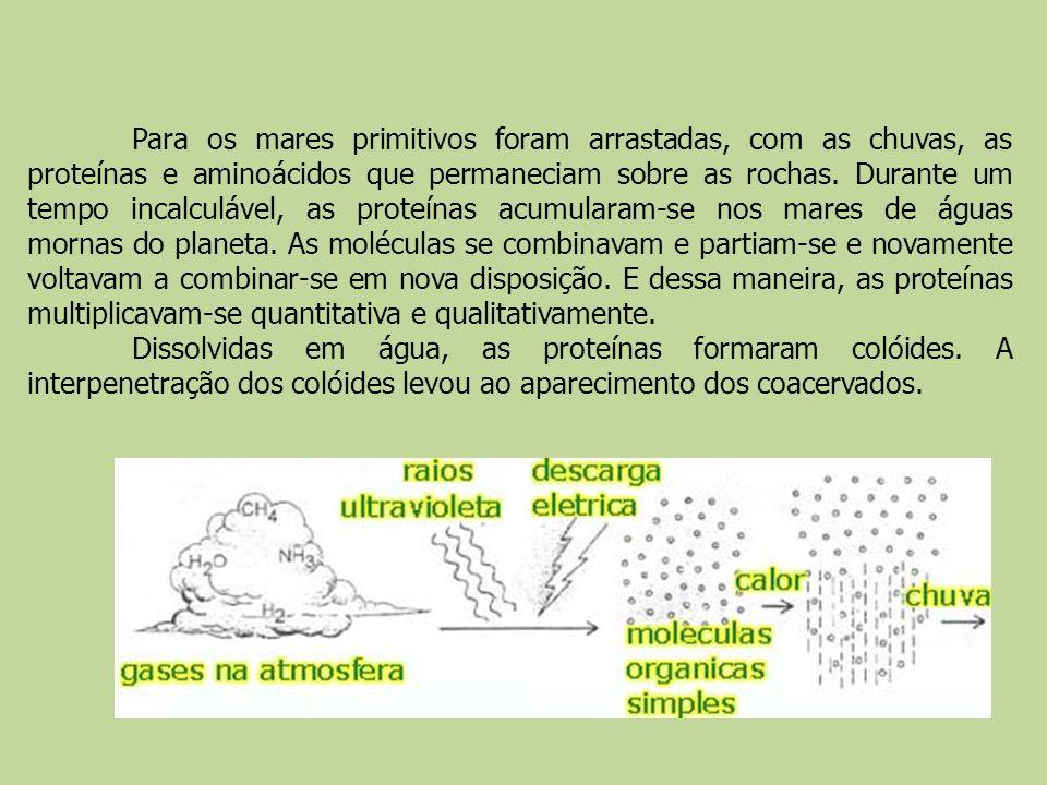 Para os mares primitivos foram arrastadas, com as chuvas, as proteínas e aminoácidos que permaneciam sobre as rochas. Durante um tempo incalculável, a
