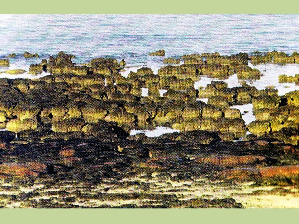 A datação radiotiva dos estromatolitos permite afirmar que eles tiveram origem por volta de 4 bilhões a 3,5 bilhões de anos e por isto sabemos com certeza que nesta época já existia vida.