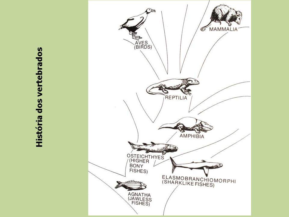 História dos vertebrados