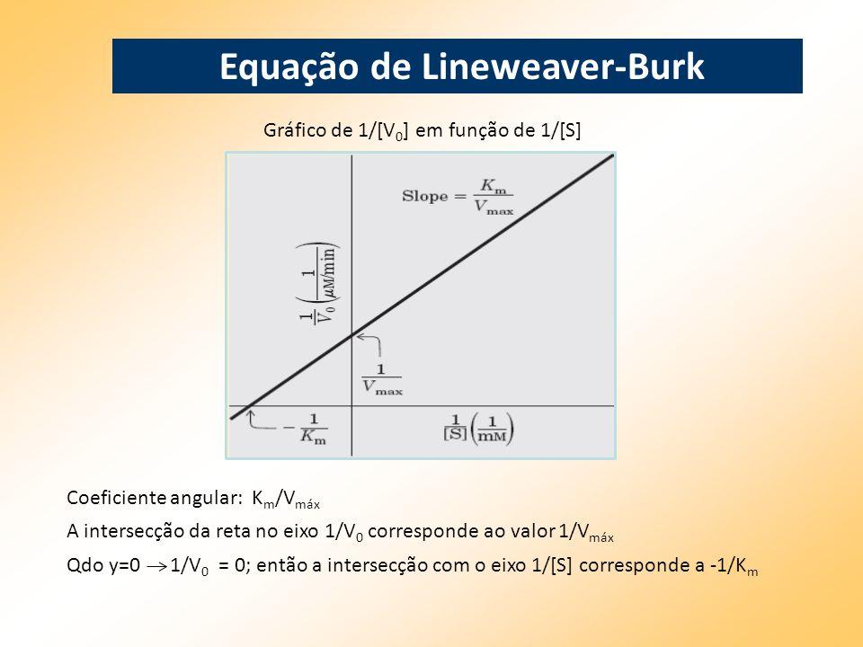 Equação de Lineweaver-Burk Gráfico de 1/[V 0 ] em função de 1/[S] Coeficiente angular: K m /V máx A intersecção da reta no eixo 1/V 0 corresponde ao v