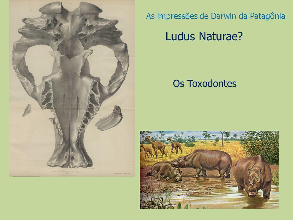 Os Toxodontes Ludus Naturae? As impressões de Darwin da Patagônia
