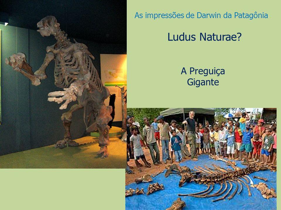 Ludus Naturae? A Preguiça Gigante As impressões de Darwin da Patagônia