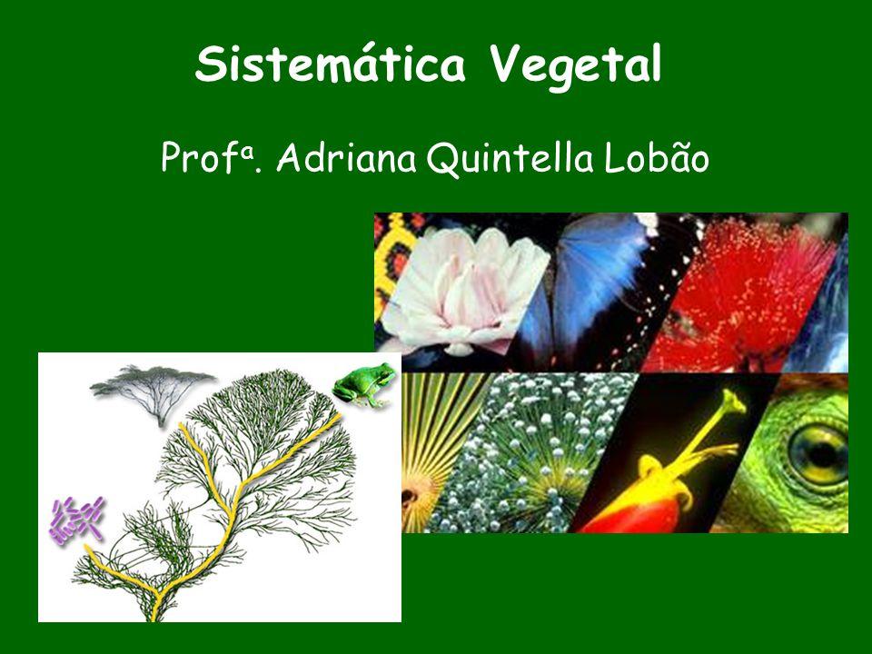 Sistemática Vegetal Prof a. Adriana Quintella Lobão