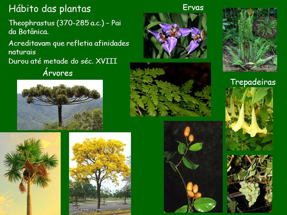 Hábito das plantas Árvores Theophrastus (370-285 a.c.) – Pai da Botânica. Ervas Trepadeiras Acreditavam que refletia afinidades naturais Durou até met