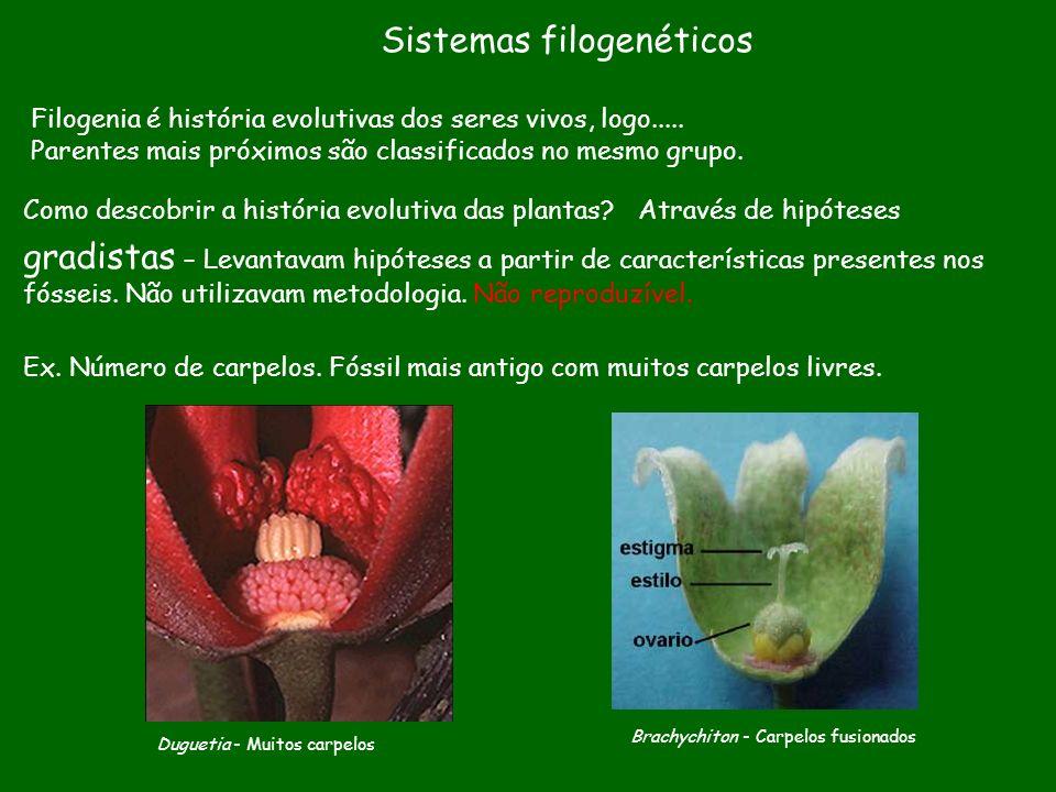 Sistemas filogenéticos Filogenia é história evolutivas dos seres vivos, logo..... Parentes mais próximos são classificados no mesmo grupo. gradistas –