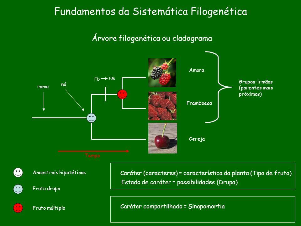 Fundamentos da Sistemática Filogenética Tempo Ancestrais hipotéticos Cereja Framboesa Amora Fruto drupa Fruto múltiplo Grupos-irmãos (parentes mais pr