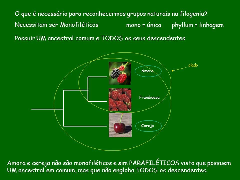 O que é necessário para reconhecermos grupos naturais na filogenia? Necessitam ser Monofiléticos mono = única phyllum = linhagem Possuir UM ancestral