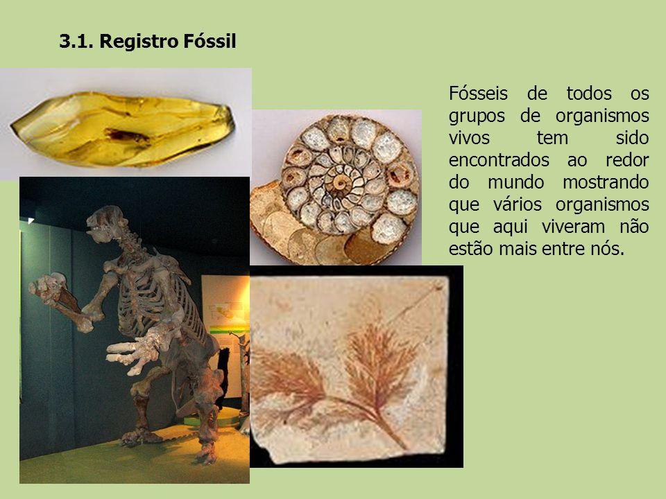 3.1. Registro Fóssil Fósseis de todos os grupos de organismos vivos tem sido encontrados ao redor do mundo mostrando que vários organismos que aqui vi