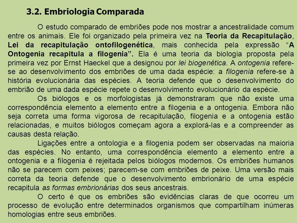 3.2. Embriologia Comparada O estudo comparado de embriões pode nos mostrar a ancestralidade comum entre os animais. Ele foi organizado pela primeira v