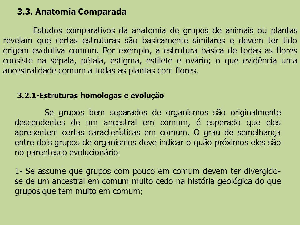 3.3. Anatomia Comparada Estudos comparativos da anatomia de grupos de animais ou plantas revelam que certas estruturas são basicamente similares e dev