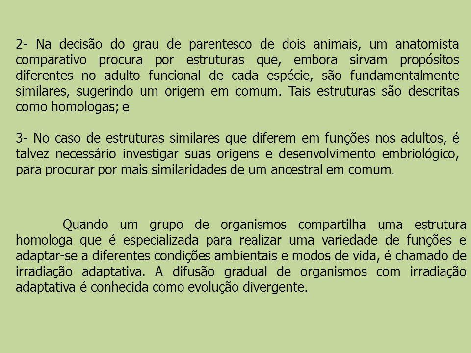 2- Na decisão do grau de parentesco de dois animais, um anatomista comparativo procura por estruturas que, embora sirvam propósitos diferentes no adul