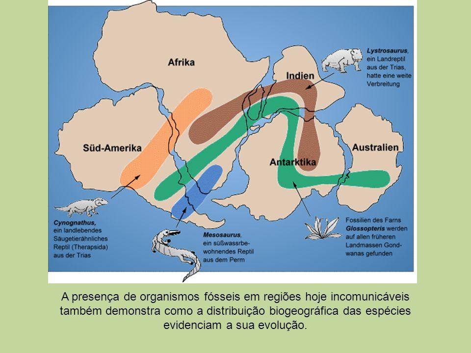 A presença de organismos fósseis em regiões hoje incomunicáveis também demonstra como a distribuição biogeográfica das espécies evidenciam a sua evolu