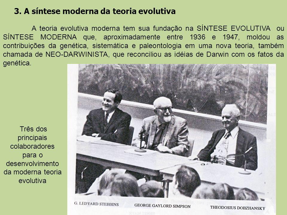 3. A síntese moderna da teoria evolutiva A teoria evolutiva moderna tem sua fundação na SÍNTESE EVOLUTIVA ou SÍNTESE MODERNA que, aproximadamente entr