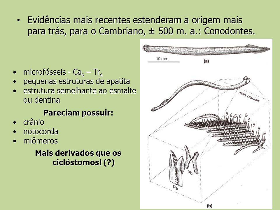 Evidências mais recentes estenderam a origem mais para trás, para o Cambriano, ± 500 m. a.: Conodontes. Evidências mais recentes estenderam a origem m