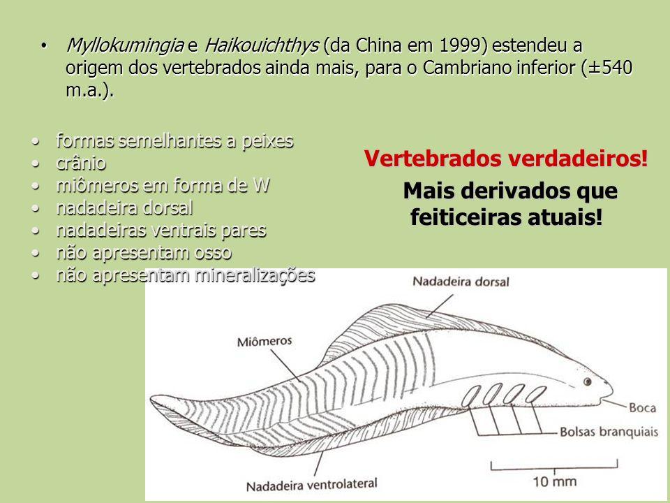 Myllokumingia e Haikouichthys (da China em 1999) estendeu a origem dos vertebrados ainda mais, para o Cambriano inferior (±540 m.a.). Myllokumingia e