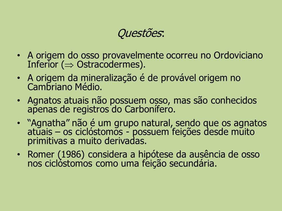 Questões: A origem do osso provavelmente ocorreu no Ordoviciano Inferior ( Ostracodermes). A origem da mineralização é de provável origem no Cambriano
