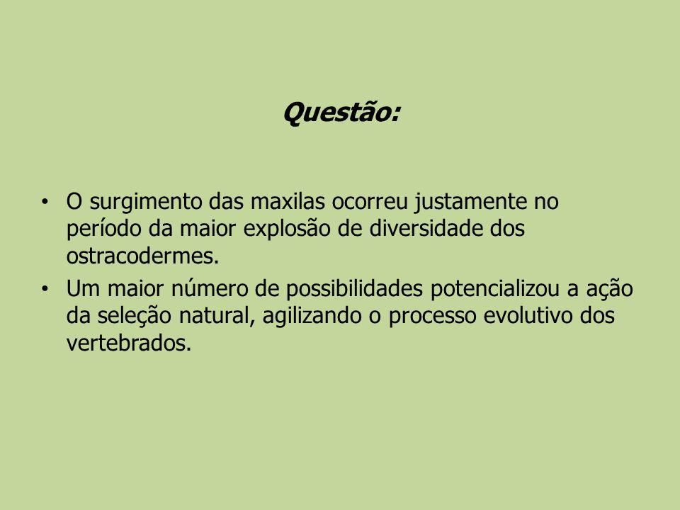 Questão: O surgimento das maxilas ocorreu justamente no período da maior explosão de diversidade dos ostracodermes. Um maior número de possibilidades