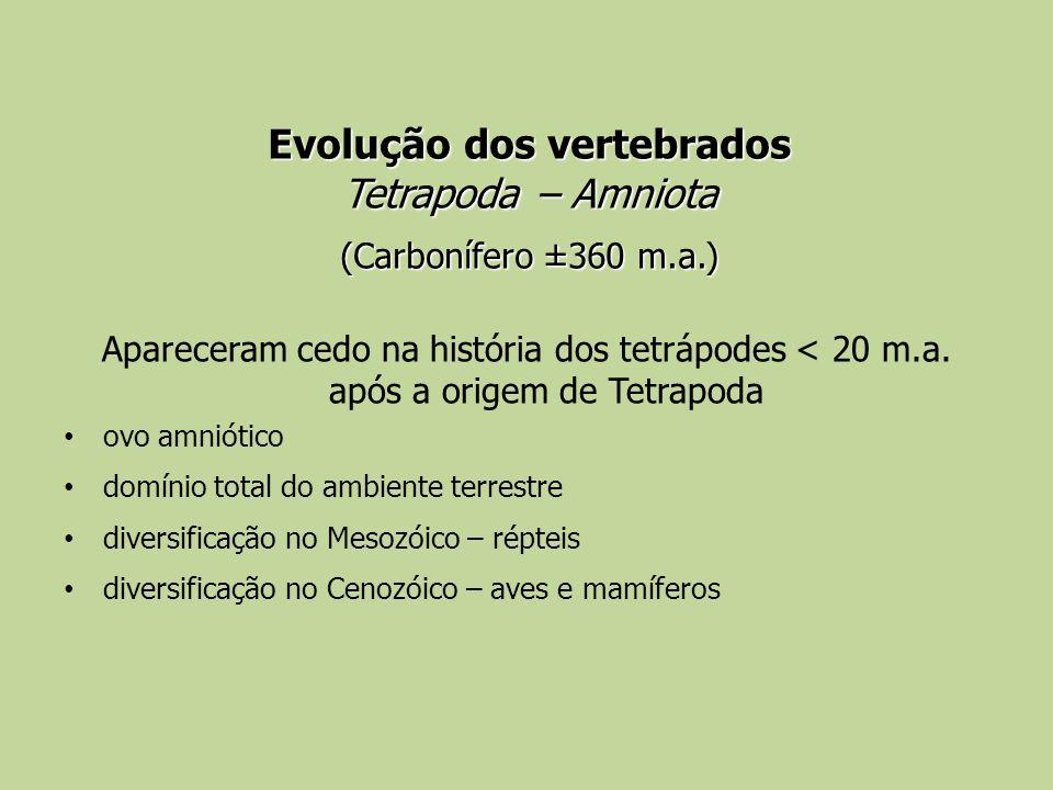 Evolução dos vertebrados Tetrapoda – Amniota (Carbonífero ±360 m.a.) Apareceram cedo na história dos tetrápodes < 20 m.a. após a origem de Tetrapoda o