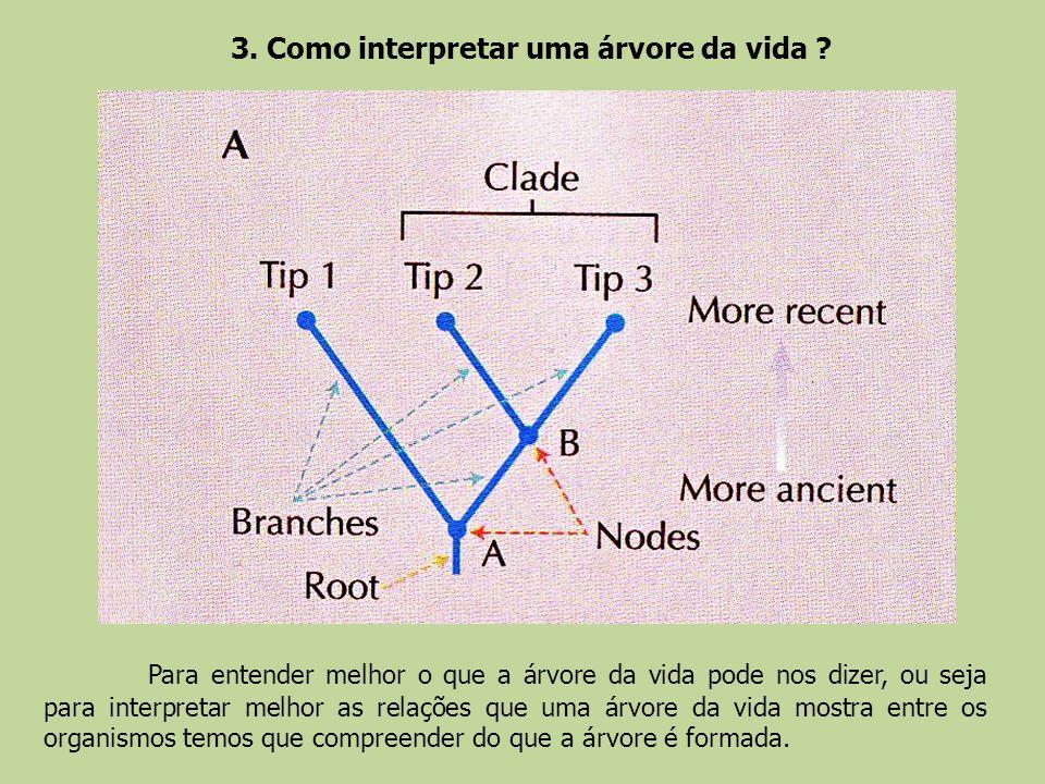 3. Como interpretar uma árvore da vida ? Para entender melhor o que a árvore da vida pode nos dizer, ou seja para interpretar melhor as relações que u