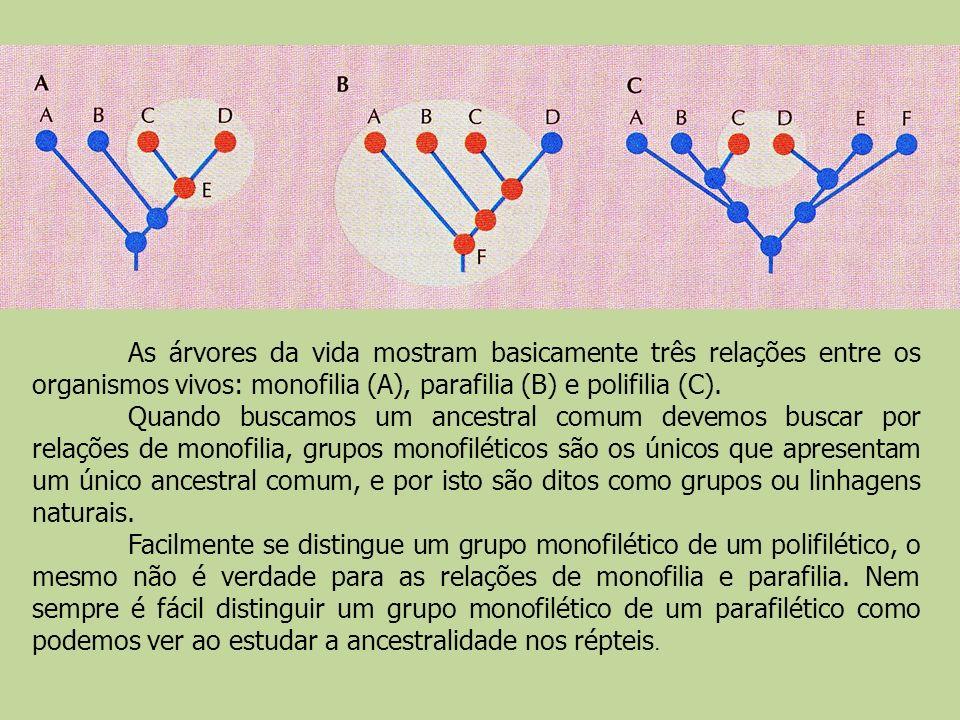 As árvores da vida mostram basicamente três relações entre os organismos vivos: monofilia (A), parafilia (B) e polifilia (C). Quando buscamos um ances