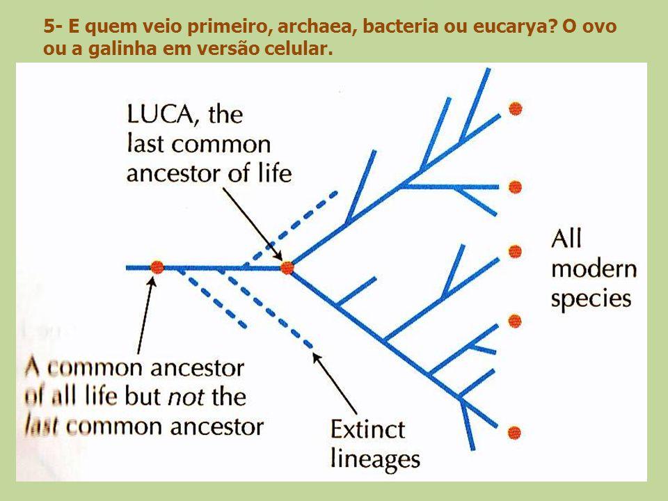 5- E quem veio primeiro, archaea, bacteria ou eucarya? O ovo ou a galinha em versão celular.
