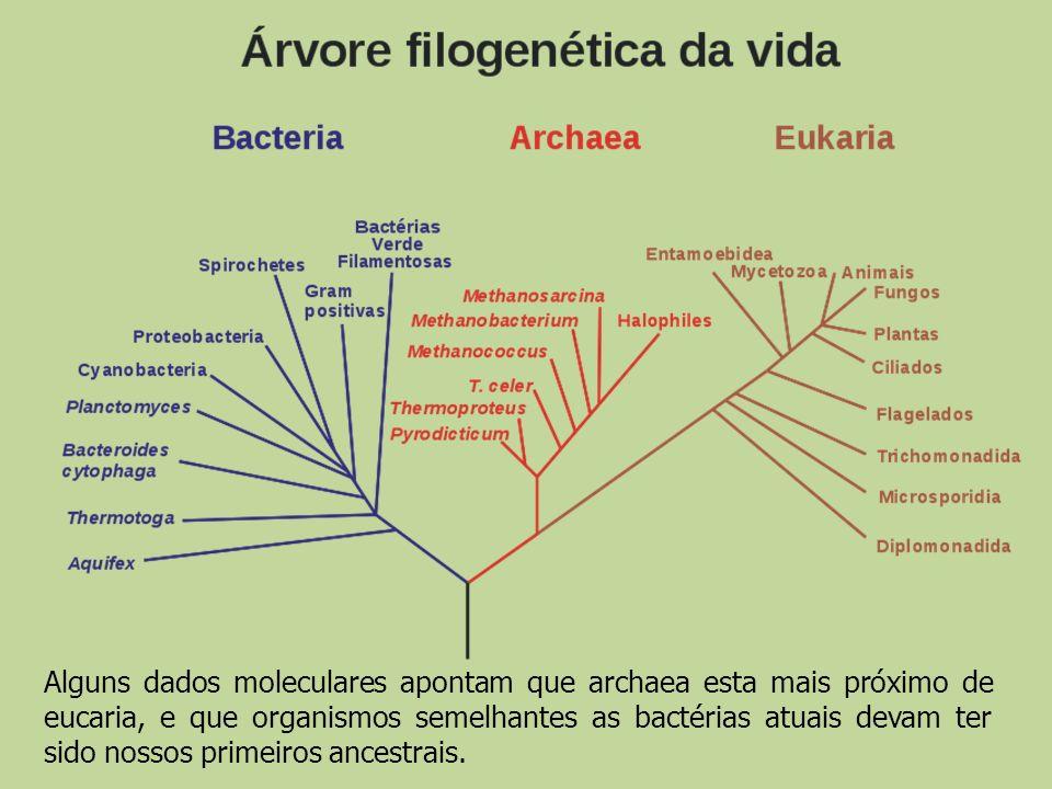 Alguns dados moleculares apontam que archaea esta mais próximo de eucaria, e que organismos semelhantes as bactérias atuais devam ter sido nossos prim