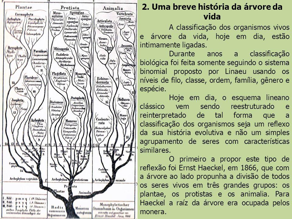 2. Uma breve história da árvore da vida A classificação dos organismos vivos e árvore da vida, hoje em dia, estão intimamente ligadas. Durante anos a