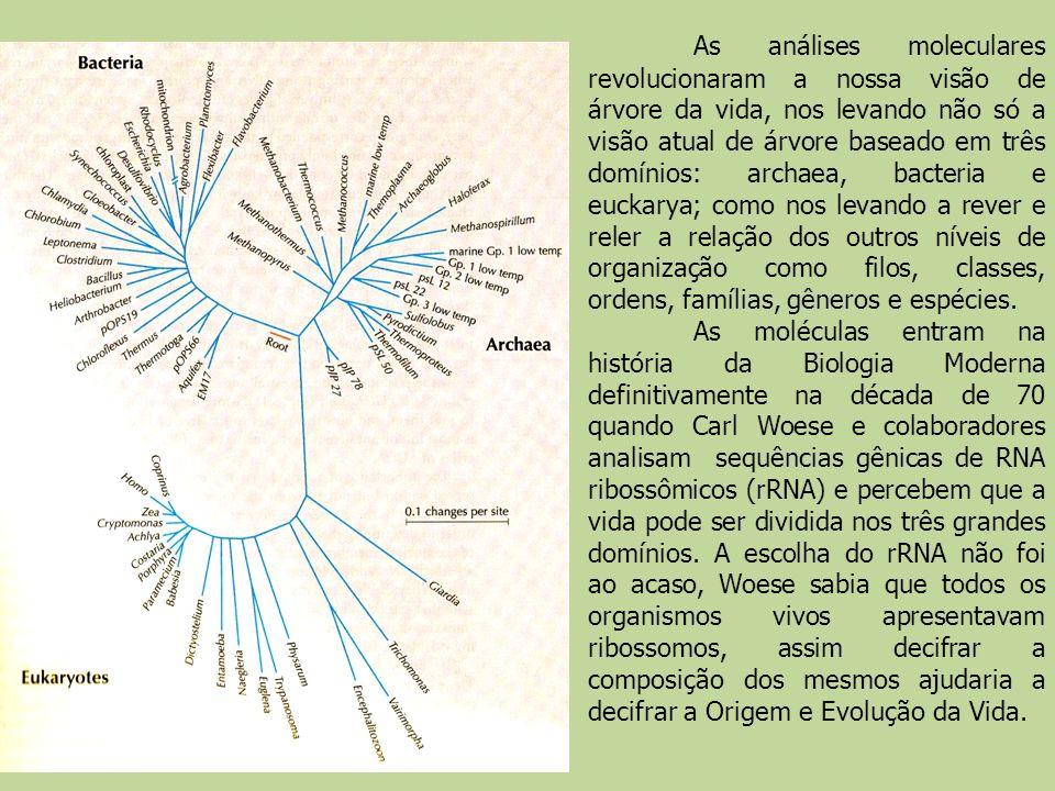 As análises moleculares revolucionaram a nossa visão de árvore da vida, nos levando não só a visão atual de árvore baseado em três domínios: archaea,