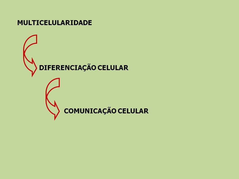 MULTICELULARIDADE DIFERENCIAÇÃO CELULARCOMUNICAÇÃO CELULAR