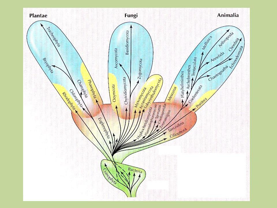 Cada célula possui um conjunto bioquímico específico e características morfológicas próprias que são determinadas por uma rede protéica regulatória intensa...