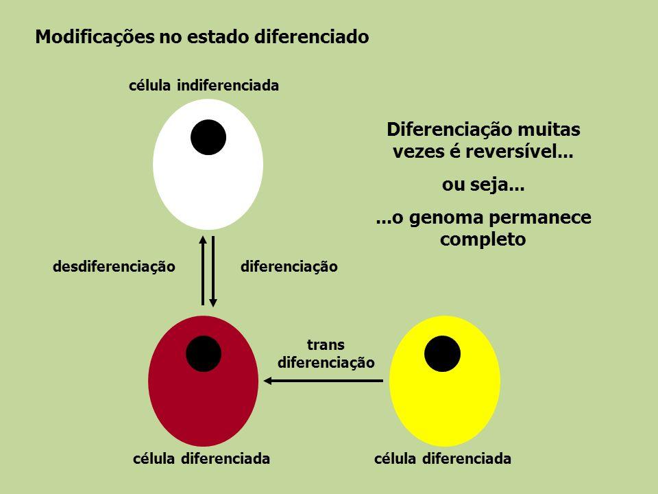 Modificações no estado diferenciado célula indiferenciada célula diferenciada diferenciaçãodesdiferenciação trans diferenciação Diferenciação muitas v