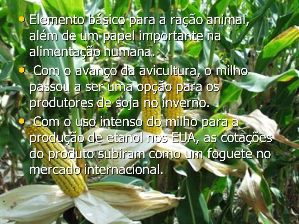 Elemento básico para a ração animal, além de um papel importante na alimentação humana. Elemento básico para a ração animal, além de um papel importan