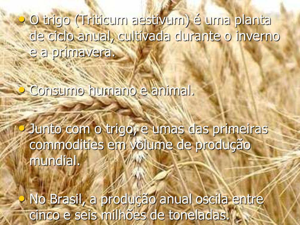 O trigo (Triticum aestivum) é uma planta de ciclo anual, cultivada durante o inverno e a primavera. O trigo (Triticum aestivum) é uma planta de ciclo