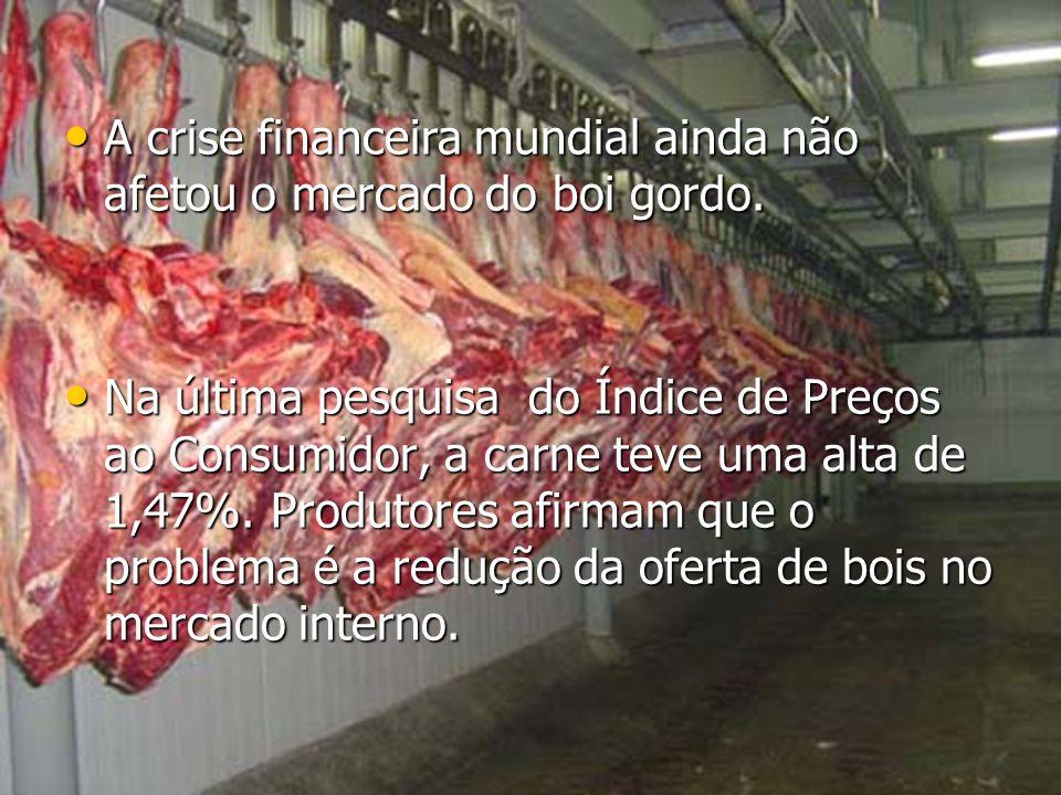 A crise financeira mundial ainda não afetou o mercado do boi gordo. A crise financeira mundial ainda não afetou o mercado do boi gordo. Na última pesq