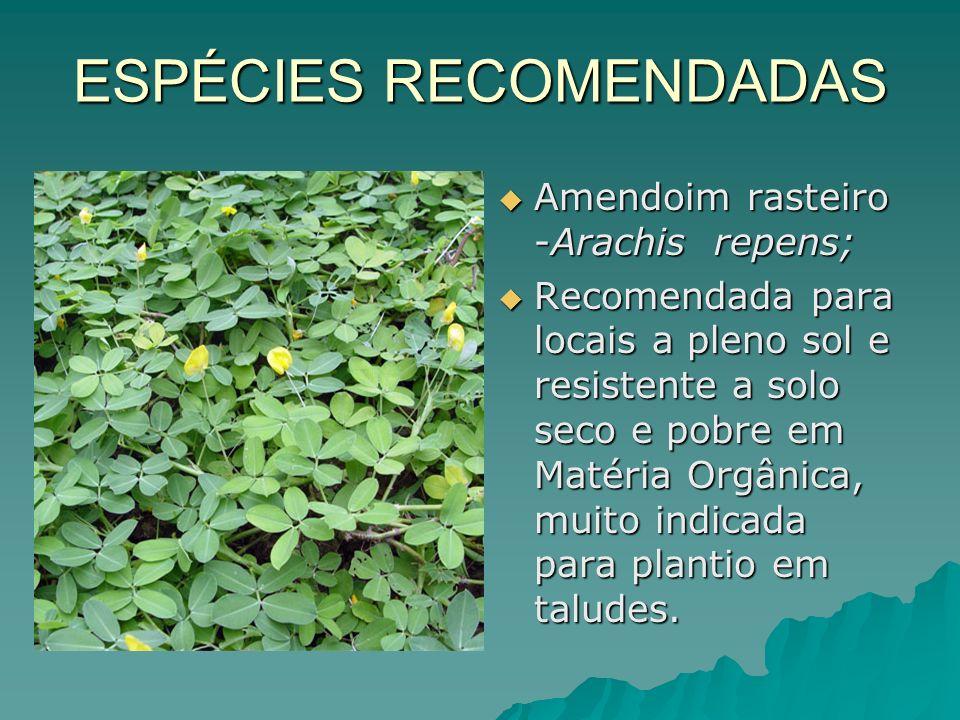 ESPÉCIES RECOMENDADAS Amendoim rasteiro -Arachis repens; Amendoim rasteiro -Arachis repens; Recomendada para locais a pleno sol e resistente a solo se
