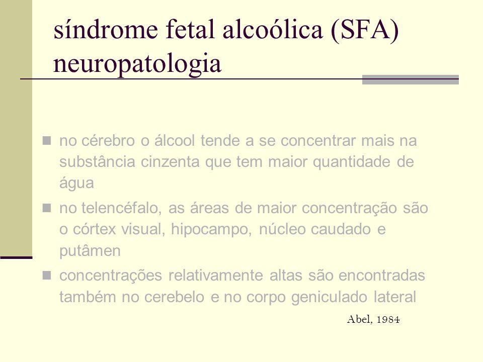 síndrome fetal alcoólica (SFA) neuropatologia no cérebro o álcool tende a se concentrar mais na substância cinzenta que tem maior quantidade de água n