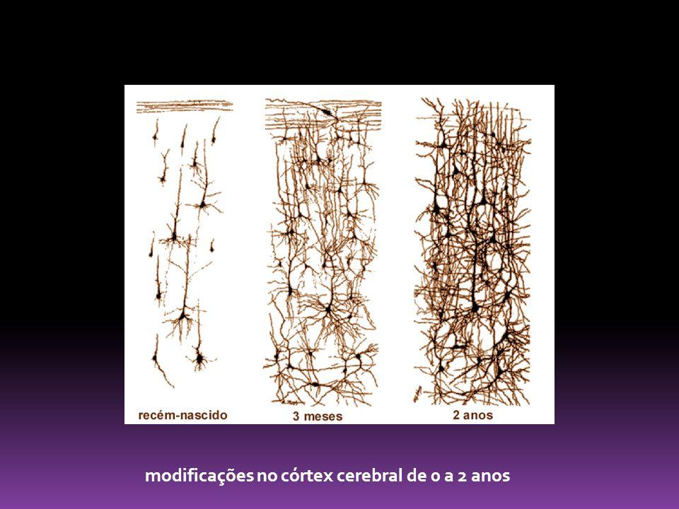 modificações no córtex cerebral de 0 a 2 anos