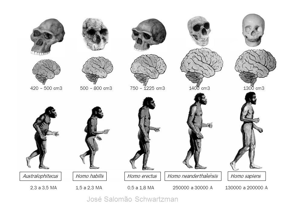 AustralophitecusHomo habilisHomo erectus Homo neanderthalensisHomo sapiens 2,3 a 3,5 MA 420 – 500 cm3 1,5 a 2,3 MA 500 – 800 cm3 0,5 a 1,8 MA 750 – 12