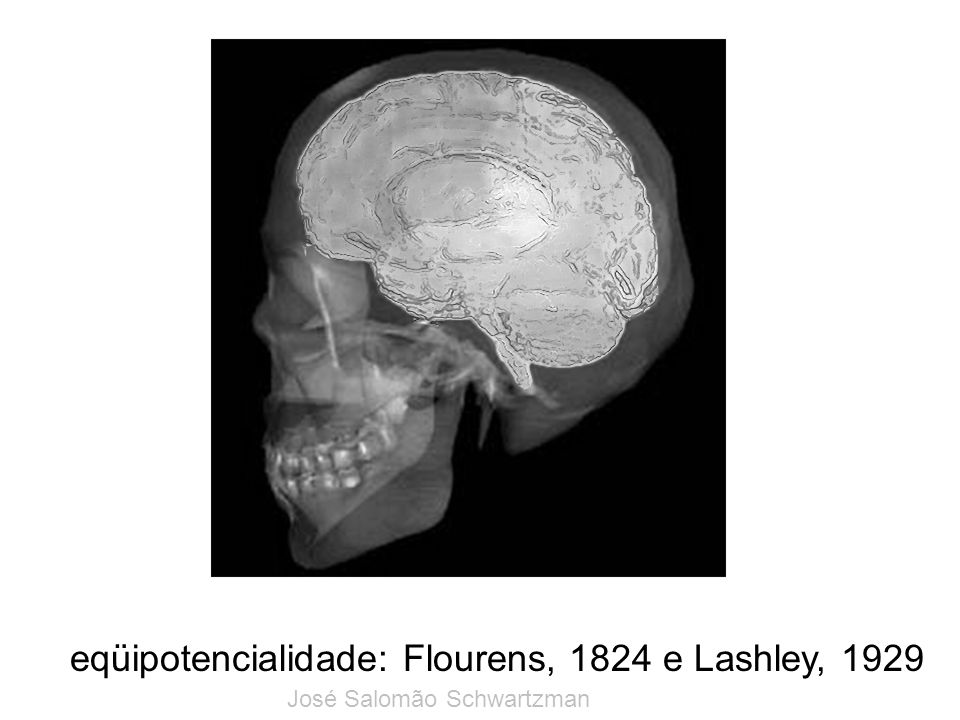 eqüipotencialidade: Flourens, 1824 e Lashley, 1929 José Salomão Schwartzman