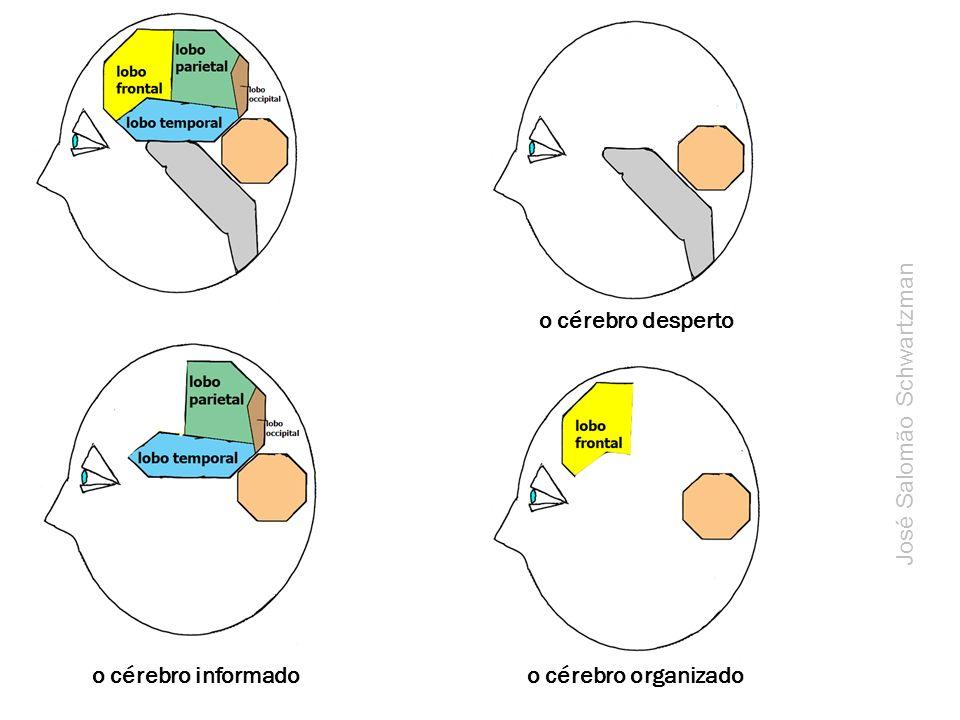 o cérebro desperto o cérebro informadoo cérebro organizado José Salomão Schwartzman