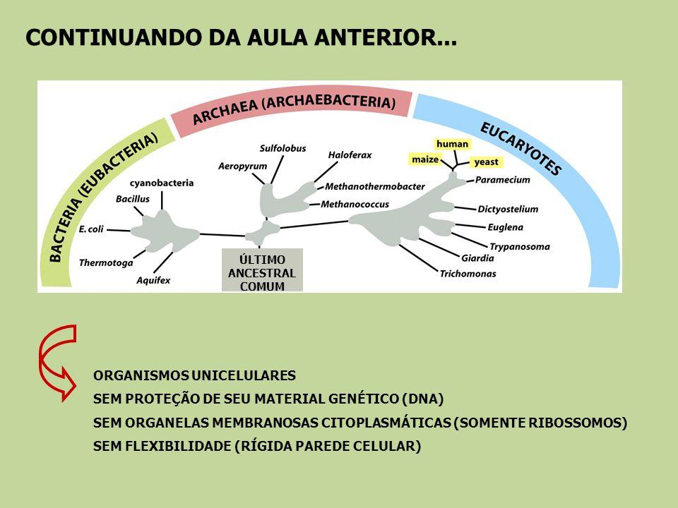 CONTINUANDO DA AULA ANTERIOR... ÚLTIMO ANCESTRAL COMUM ORGANISMOS UNICELULARES SEM PROTEÇÃO DE SEU MATERIAL GENÉTICO (DNA) SEM ORGANELAS MEMBRANOSAS C