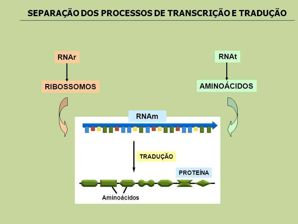 RNAm PROTEÍNA Aminoácidos TRADUÇÃO RNAr RIBOSSOMOS RNAt AMINOÁCIDOS SEPARAÇÃO DOS PROCESSOS DE TRANSCRIÇÃO E TRADUÇÃO
