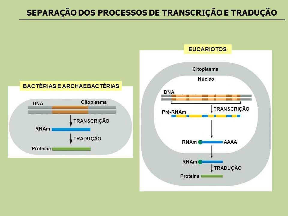 SEPARAÇÃO DOS PROCESSOS DE TRANSCRIÇÃO E TRADUÇÃO BACTÉRIAS E ARCHAEBACTÉRIAS DNA RNAm Proteína TRANSCRIÇÃO TRADUÇÃO Citoplasma EUCARIOTOS DNA Pré-RNA
